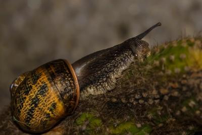 자연, 선인장, 가시, 달팽이, 곤충, 무척추동물, gastropod, 연체 동물