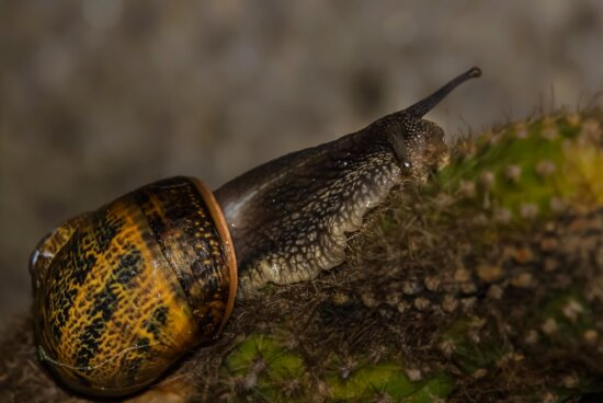 nature, cactus, thorn, snail, insect, invertebrate, gastropod, mollusk