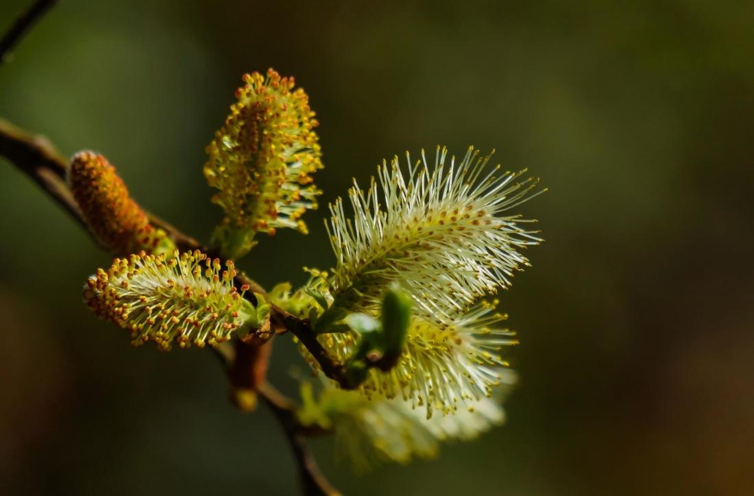 nature, flower, leaf, tree, flora, pollen, macro