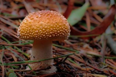 houby, houby, příroda, dřevo, jed, jídlo, list, flóra, makro