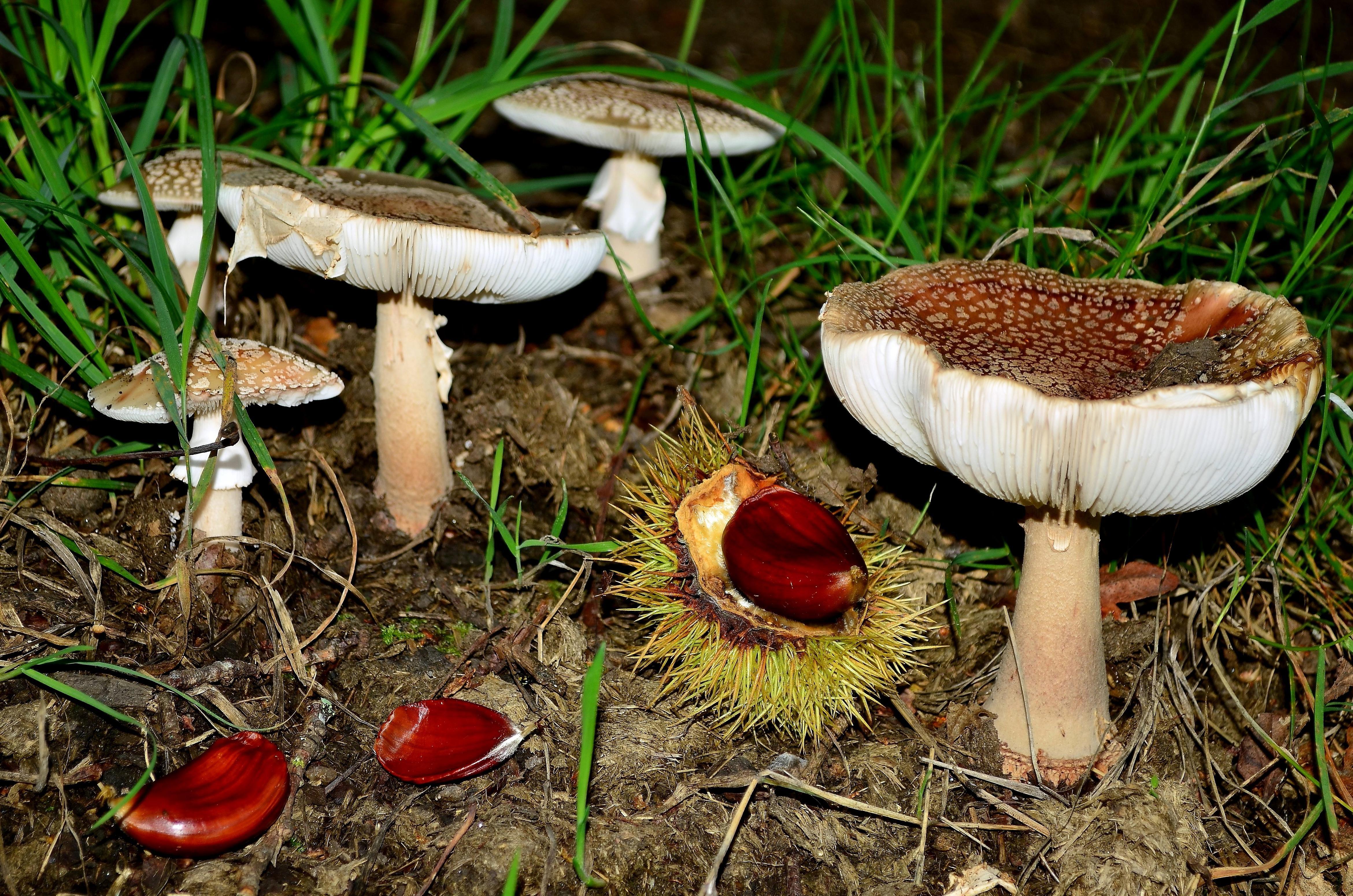 Imagen Gratis Hongo Hongo Naturaleza Semillas Veneno Macro  # Muebles No Toxicos
