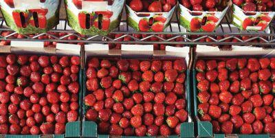 ovoce, červená, jídlo, strava, berry, sladké