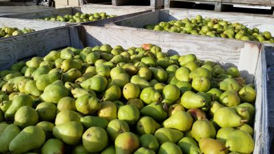 fruit, food, market, organic, nutrition, pear, diet, green, box