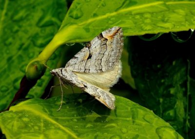 nature, insect, leaf, butterfly, garden, summer, biology
