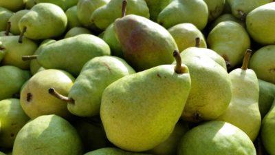 плодове, круши, храна, пазар, хранене, вкусни, витамин, природа