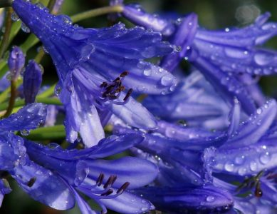 dew, raindrop, rain, petal, pistil, macro, flower, nature, flora, summer