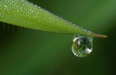 chuva, orvalho, folha, gota, natureza, gota de chuva, molhado, macro
