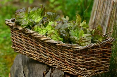 basket, food, nature, wood, vegetable, wicker basket, leaf, flora