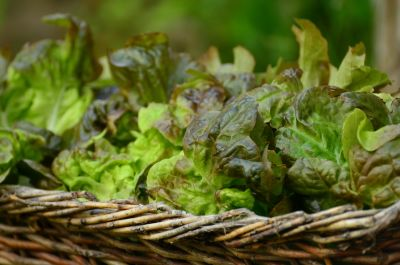 food, vegetable, leaf, flora, nature, farm, macro, detail