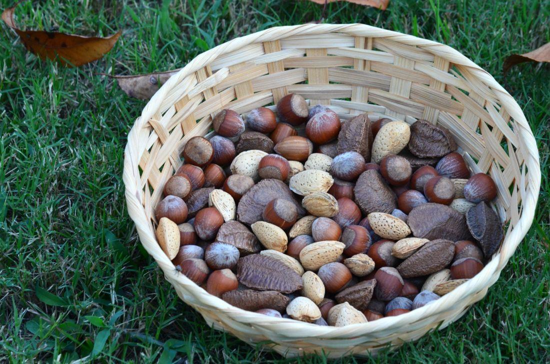hrane, košara, drvo, priroda, orah, kesten