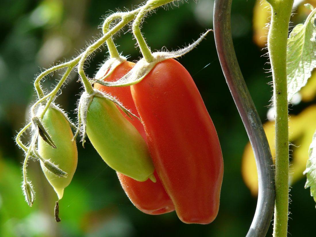 povrća, hrana, priroda, vrt, flore, list