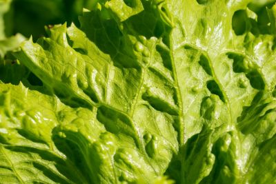 list, zelena salata, flore, povrća, hrane, prirode, salata, vrt, biljke