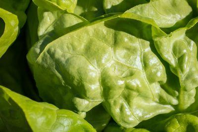 list, jedlo, šalát, zeleniny, flora, šalát, príroda, bylina, bazalka