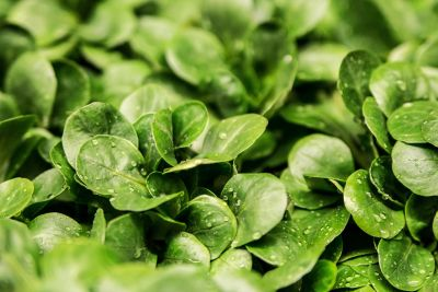 leaf, flora, nature, vegetable, spinach, herb, cress, food, organic