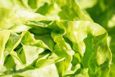 feuille, laitue, légumes, salade, nourriture, flore, nature, herbe, organique