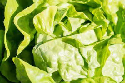 hoja, lechuga, vegetales, flora, alimentos, naturaleza, ensalada, hierbas, dieta
