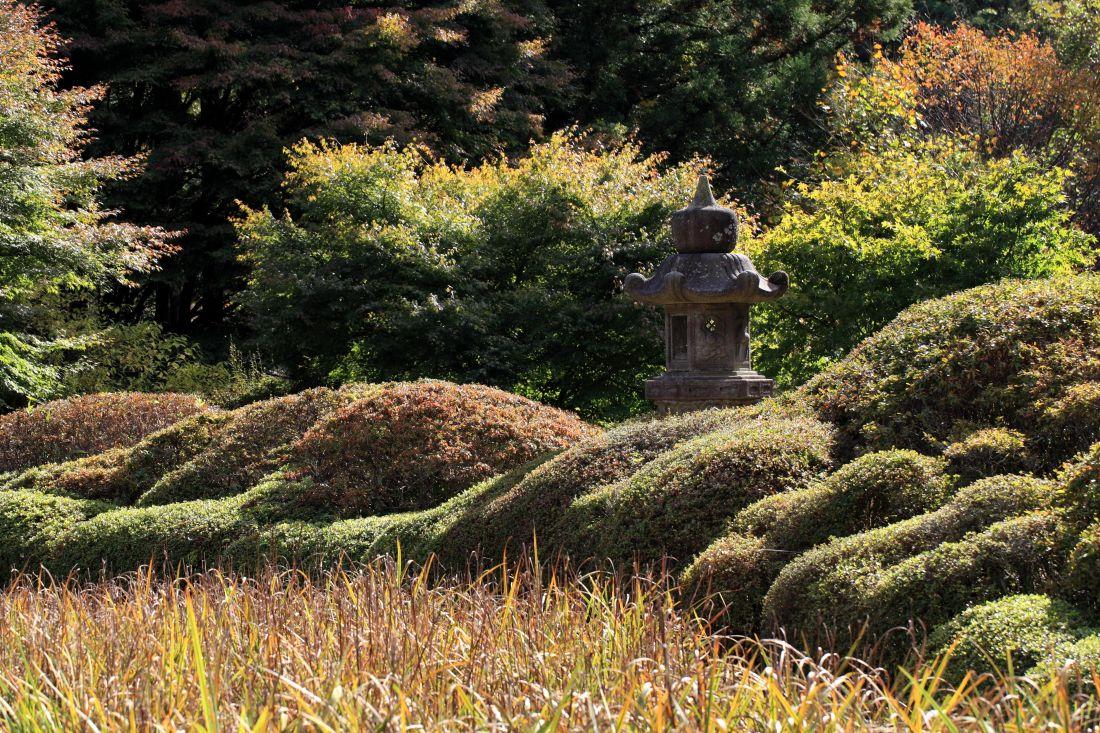 Imagen gratis jard n paisaje rbol arbusto hierba for Jardines con arboles y arbustos
