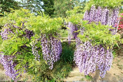 flower, nature, flora, acacia, garden, leaf, summer, shrub, beautiful