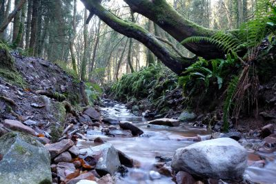 wood, nature, stream, water, river, moss, forest, landscape