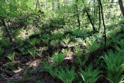 wood, nature, leaf, fern, flora, jungle, environment, landscape