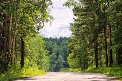 wood, tree, nature, road, leaf, landscape, rural, summer, forest