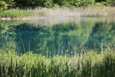vode, priroda, trava, ljeto, reed, krajolik, močvara, jezero, biljka