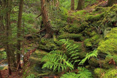 wood, nature, leaf, tree, fern, landscape, forest, plant, environment