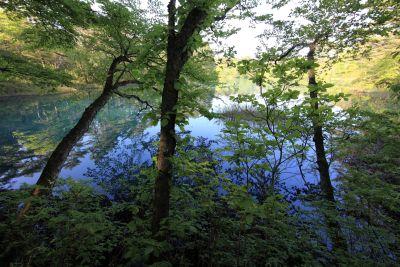 landscape, wood, nature, tree, leaf, forest, plant