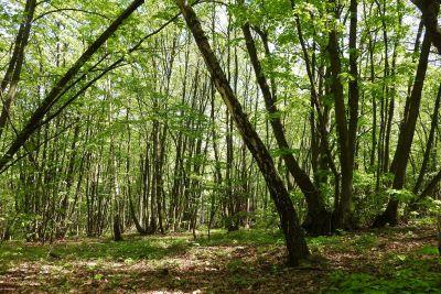 wood, tree, landscape, nature, leaf, environment, spring, forest
