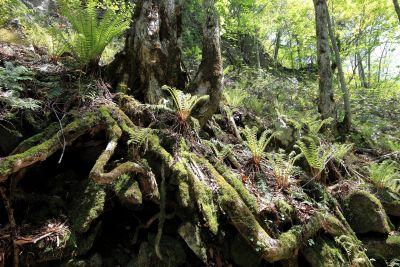 madera, naturaleza, musgo, árbol, hoja, flora, bosque, medio ambiente