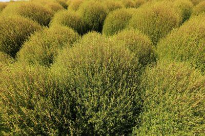 nature, arbuste, paysage, arbre, plante, champ, herbe