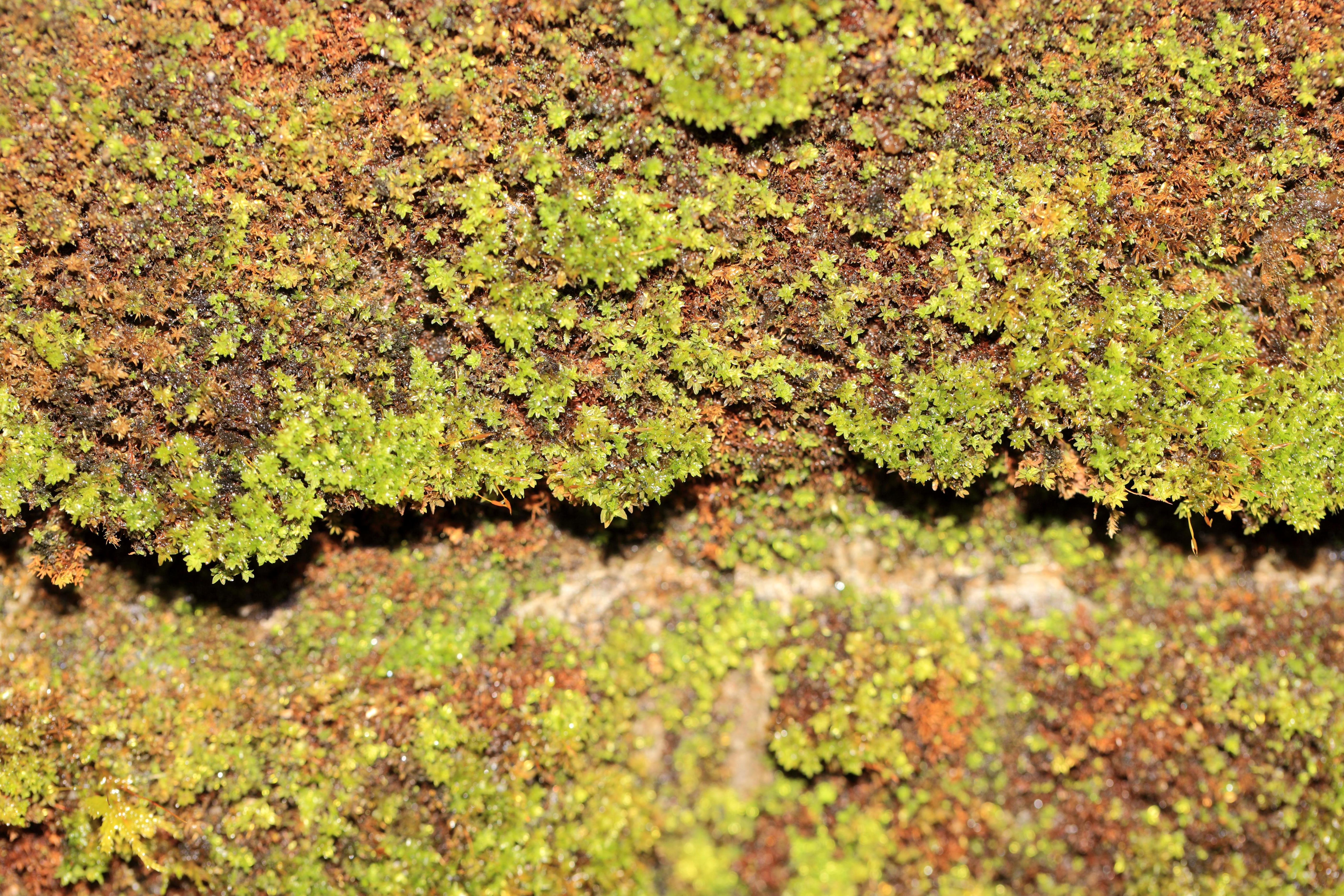 Free picture: texture, leaf, nature, moss, pattern, flora, plant