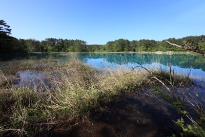 water, swamp, lake, landscape, nature, reflection, sky, forest