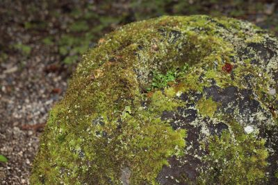 moss, nature, lichen, wood, stone, leaf, tree, plant