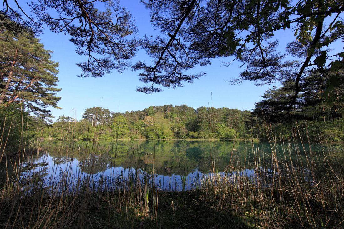 nature, water, tree, landscape, wood, lake, reflection, sky