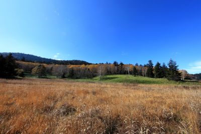 пейзаж, природа, небе, дърво, поле, трева, селското стопанство,