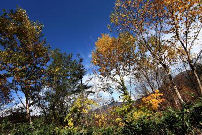 Baum, Landschaft, Blatt, Natur, Holz, Pappel, Herbst, Wald, Blätter