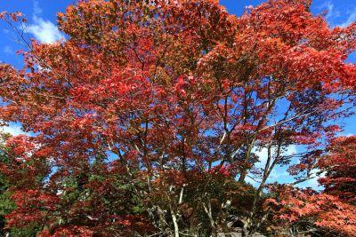 list, stablo, prirode, krajobraza, grm, jesen, biljka