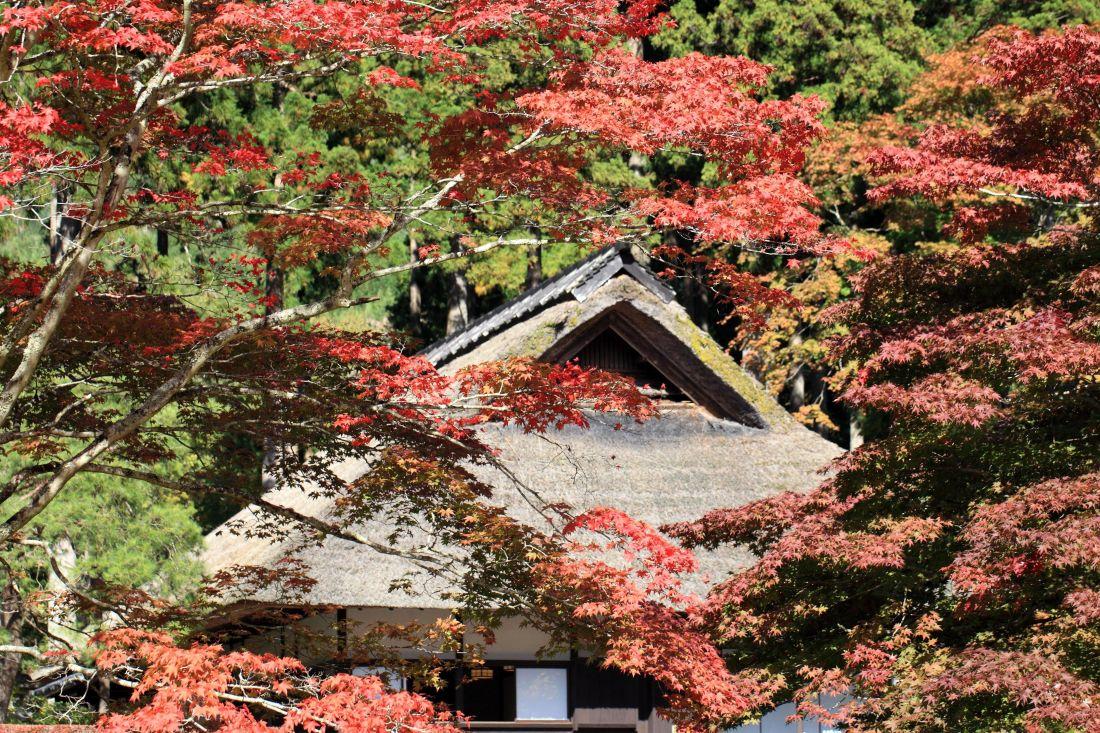 list, priroda, drvo, grm, jesen, biljka, eksterijer
