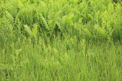 Flora, natuur, milieu, gras, zomer, blad, veld, plant