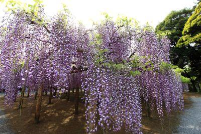 flower, acacia, park, flora, nature, tree, garden, leaf, plant, autumn, forest