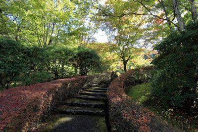 дървен материал, дърво, листа, пейзаж, природа, гора, път