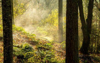 wood, tree, leaf, nature, landscape, mist, fog, autumn