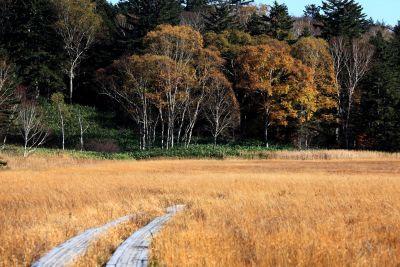 paesaggio, albero, natura, legno, campagna, rura