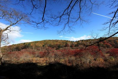 paesaggio, albero, ombra, alba, natura, cielo, montagna