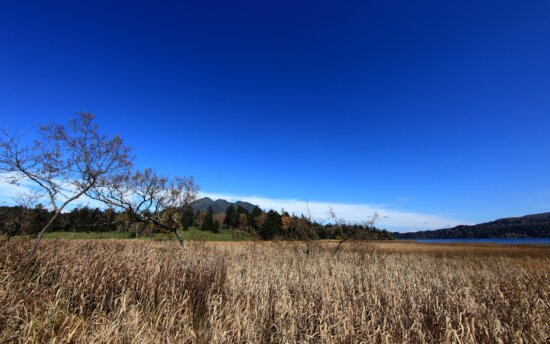 landscape, sky, nature, tree, field, grass, rural