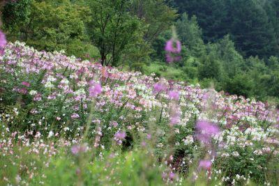 flower, nature, summer, landscape, field, flora, grassland