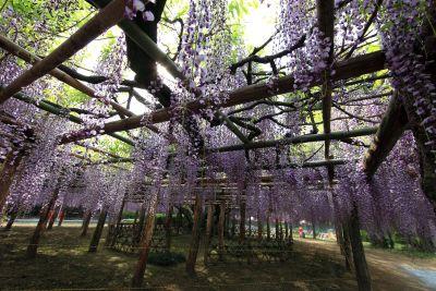 acacia, tree, branch, flower, nature, wood, leaf, landscape, flora, garden