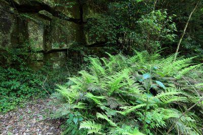 Fern, dřeva, listí, deštný prales, příroda, prostředí, strom, krajina