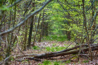 dřevo, příroda, strom, list, krajina, životní prostředí, flora, lesní